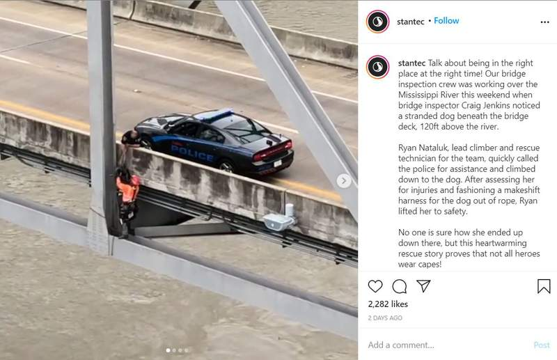 Social media showing the dog rescued from the Mississippi River bridge in Natchez, Miss.