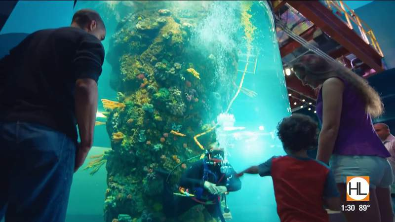 Do you need a getaway? Moody Gardens is set to open Memorial Day Weekend | HOUSTON LIFE | KPRC 2