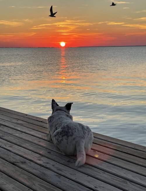 FROM CLICK2PINS: Smokey the dog, Galveston  (Photo from Gary Chitty)