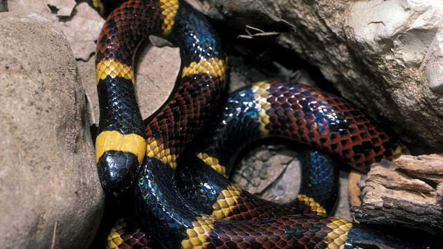 Man says he spotted venomous coral snake at Houston's Memorial Park