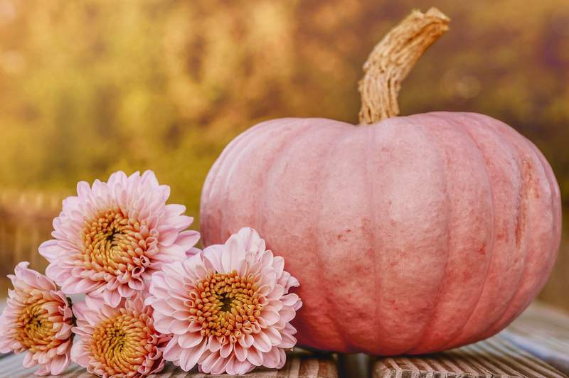 Pink Pumpkin