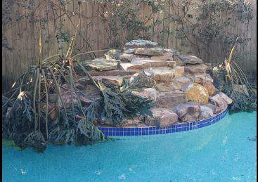My pool plants have bowed down to Mother Nature's cold!