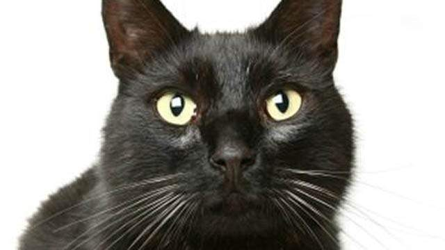 Black Cats -- It's bad luck if a black cat crosses your path, most likely stemming from medieval beliefs that witches took the form of these dark felines.