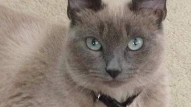 Pet owner heartbroken, claims family cat accidentally euthanized at vet visit in north Harris County
