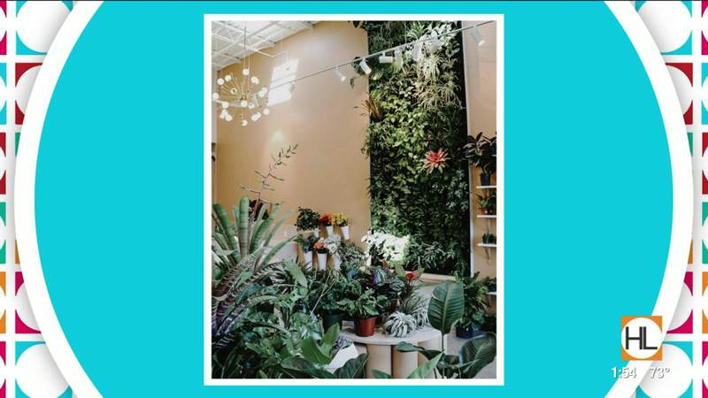 Receive 25% off any air plant at this Houston plant and floral design shop | HOUSTON LIFE | KPRC 2