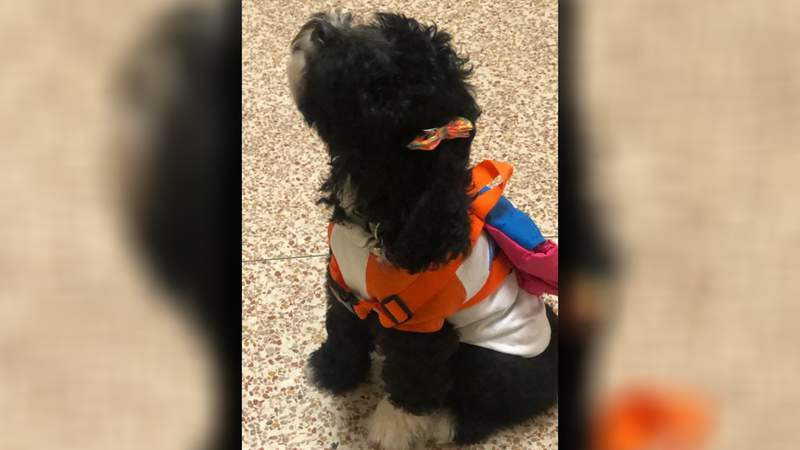 Jamaica is HISD's first comfort dog.