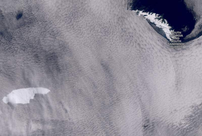 In this graphic provided by the European Space Agency containing modified Copernicus Sentinel data (2020), processed by the Sentinel Hub, shows a iceberg floating towards the sub-Antarctic island of South Georgia.  The iceberg the size of the U.S. state of Delaware is raising fears it could indirectly endanger young wildlife. The British Antarctic Survey said Wednesday, Nov. 4, 2020 it is concerned the iceberg may run aground near the island and prevent land-based marine predators from reaching food supplies and returning to their offspring. (European Space Agency containing modified Copernicus Sentinel data (2020), processed by the Sentinel Hub via AP)