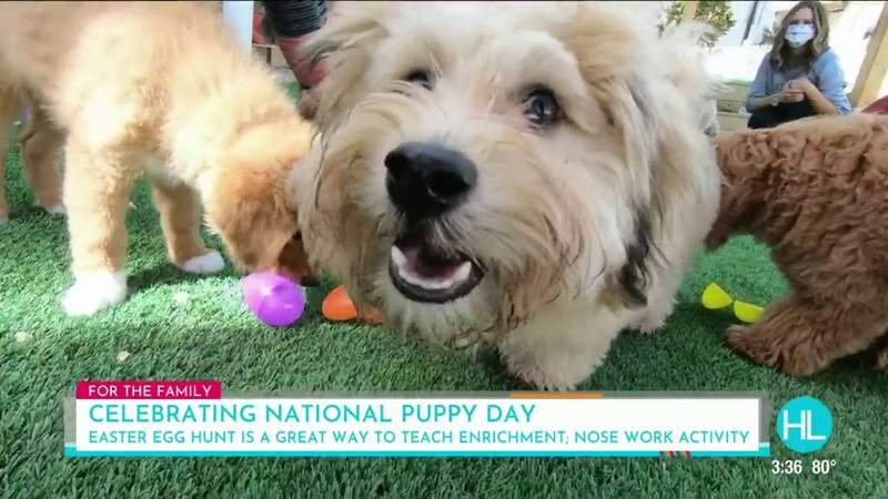PAW-some ways the whole family can have fun celebrating National Puppy Day | HOUSTON LIFE | KPRC 2