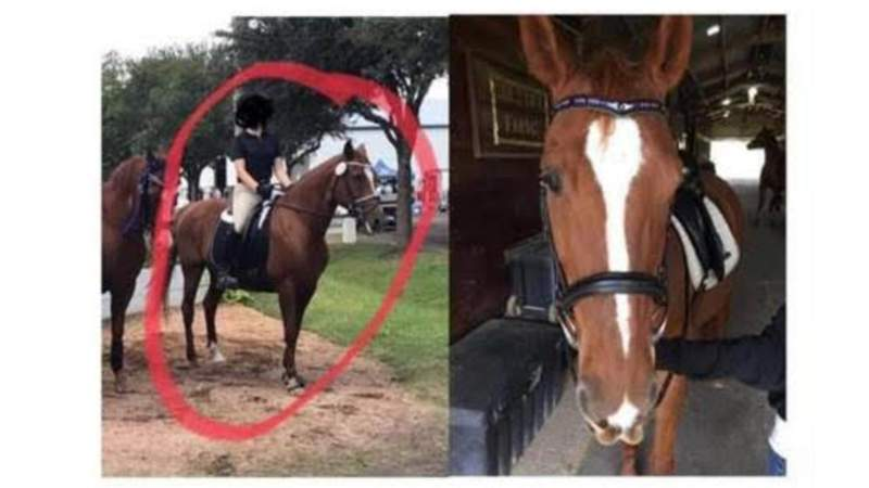 A Southwest Houston horse training facility is offering a $2,500 reward to locate their stolen horse.