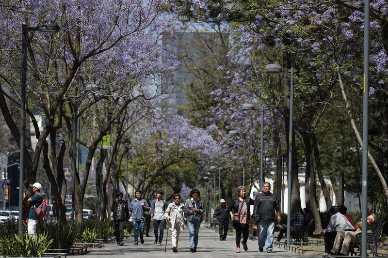 People stroll under blossoming jacaranda trees in the Alameda park in Mexico City, Monday, March 23, 2020. Beginning Monday, Mexico's capital shut down museums, bars, gyms, churches, and other non-essential businesses that gather large numbers of people, in an attempt to slow the spread of the new coronavirus. (AP Photo/Rebecca Blackwell)