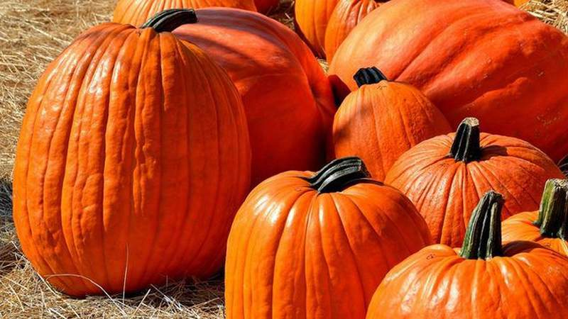 Changes you should know about before visiting a pumpkin patch this season