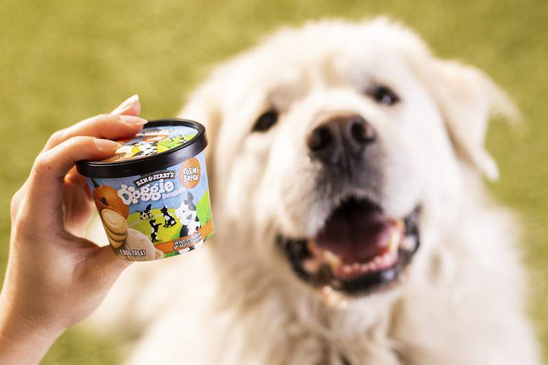 This photo provided by Ben & Jerry's shows Ben & Jerry's dog treats.  The venerable Vermont ice cream company said Thursday, Jan. 7, 2021, it's introducing a line of frozen dog treats, its first foray into the lucrative pet food market. The treats, sold in 4-ounce cups, will arrive in U.S. groceries and pet stores later this month.  (Ben & Jerry's via AP)