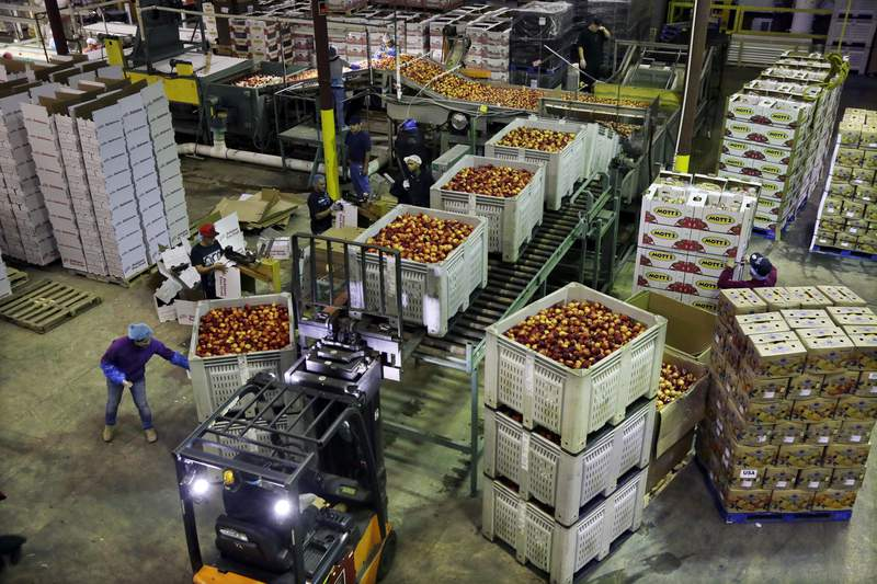 FILE - In this Aug. 27, 2013, file photo, workers load large containers of nectarines for sorting at Eastern ProPak Farmers Cooperative in Glassboro, N.J. U.S. wholesale prices fell 0.6% in February 2020, the biggest decline in five years, led by a sharp drop in energy costs. The Labor Department said the decline in its producer price index, which measures price pressures before they reach the consumer, followed a 0.5% rise in January. It was the sharpest decline since a similar 0.6% drop in January 2015. (AP Photo/Mel Evans, File)