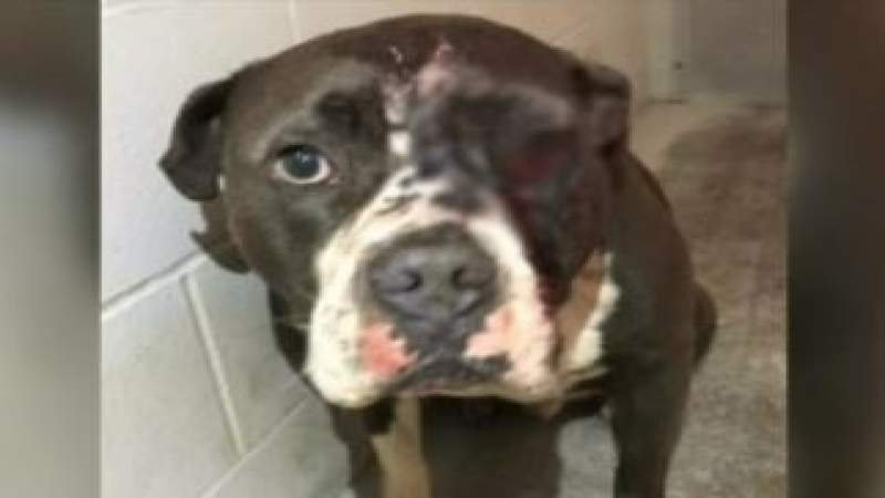 Man charged with shooting dog in face