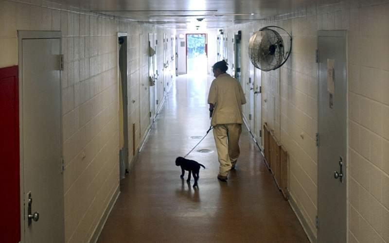 FILE - This photo from Monday June 21, 2004, shows New Jersey's Edna Mahan Correctional Facility inmate Mary Tobin, walking a puppy down a cell block hallway as part of a program called Puppies Behind Bars, where dogs are cared for until they are ready to be expertly trained to detect explosives or as guide dogs for the blind. Dozens of corrections officers at New Jersey's only women's prison have been placed on paid leave following allegations that staff brutally beat and sexually assaulted inmates there. (AP Photo/Daniel Hulshizer, File)