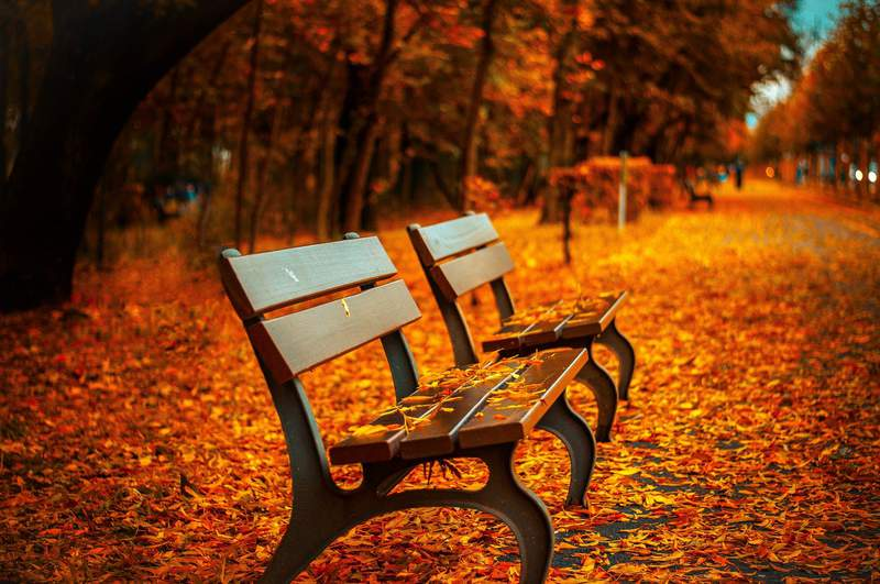 Stock photo of benches during Fall