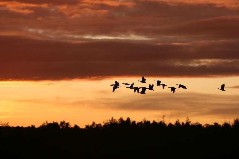 Migratory birds stock image