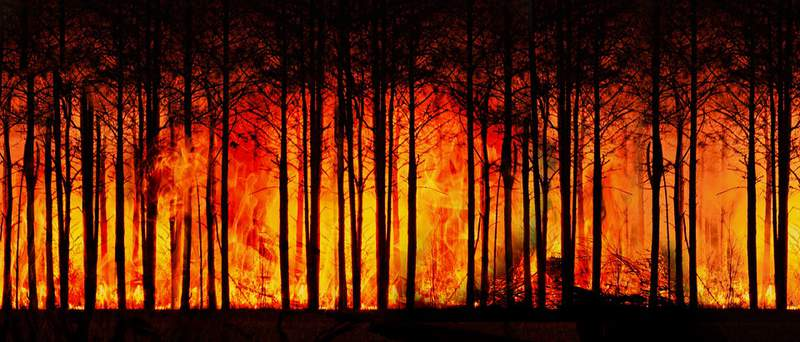 Rapid increase in Forest Fires