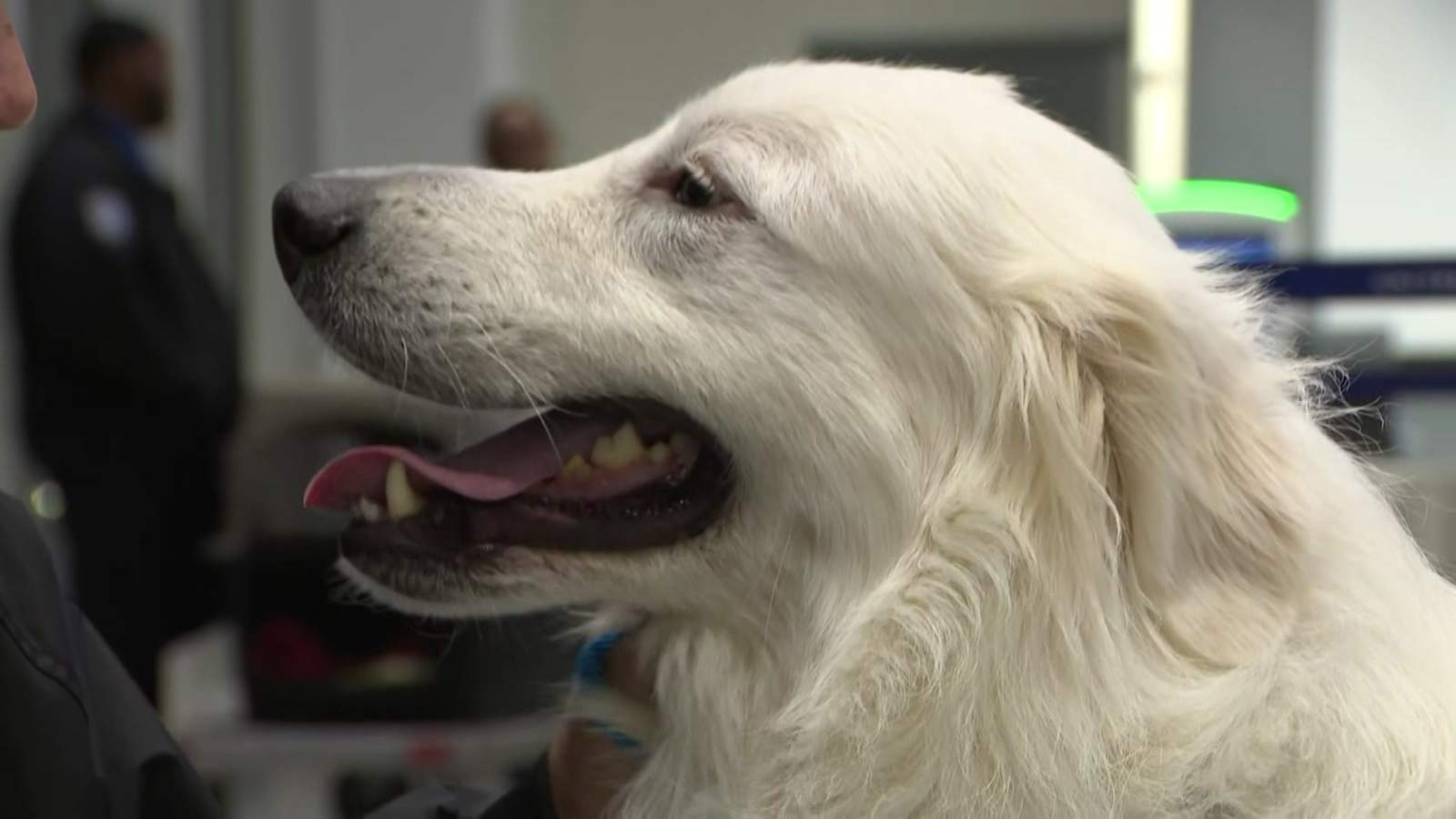Dog rescued from 'deplorable' Montgomery County home being reunited with owner 2,000 miles away