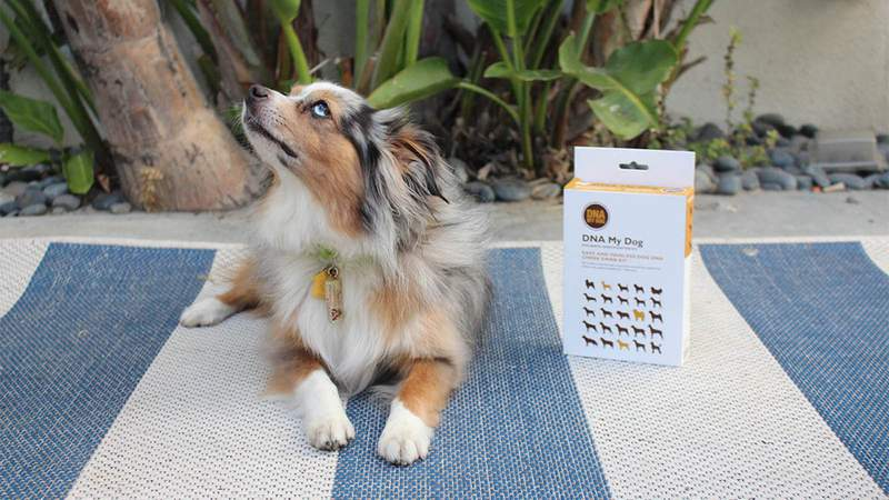 Ever wonder what's your dog's breed? DNA My Dog Breed Identification Test finally helps you know.