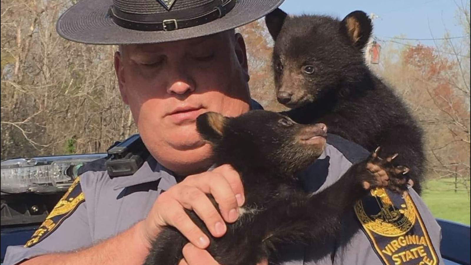 Baby bear cubs rescued after mom dies in traffic crash