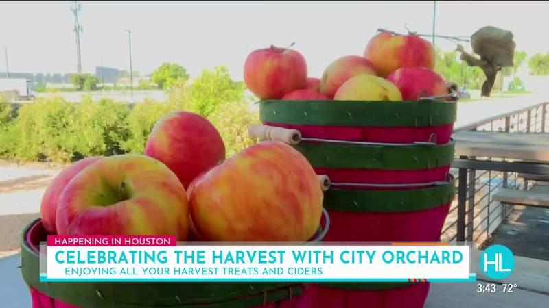Celebrating the Harvest Festival in Houston at City Orchard   HOUSTON LIFE   KPRC 2