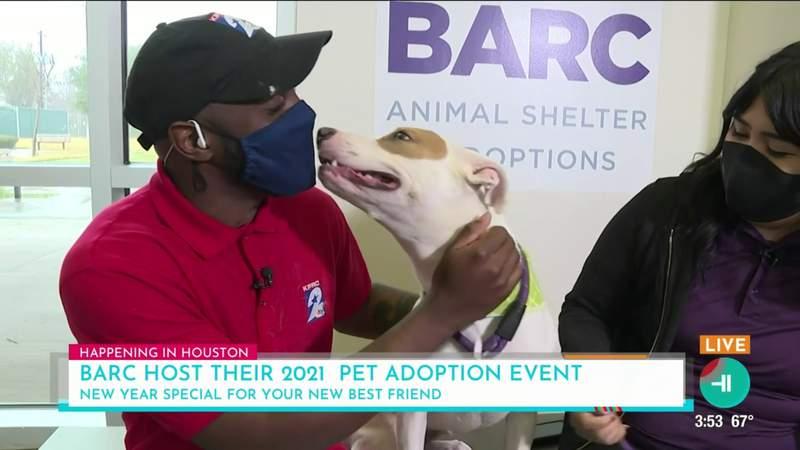 Barc Animal Shelter offering $21 pet adoptions for 2021 | HOUSTON LIFE | KPRC 2