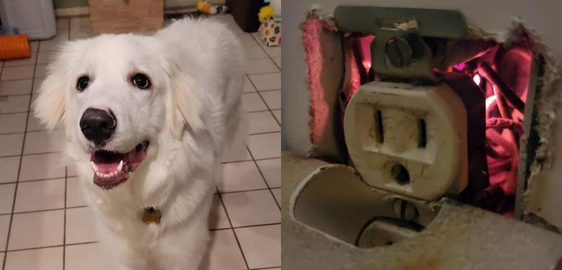 Willow and the fire she found behind an outlet.