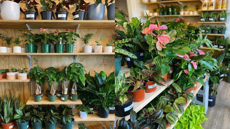 Wet My Plant is opening a second location in Old Town Spring.