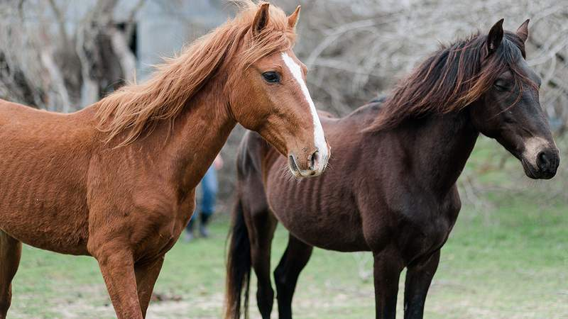 17  emaciated horses rescued from a property in Washington County.