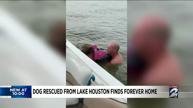 Dramatic rescue of dog from Lake Houston caught on camera; pup finds forever home