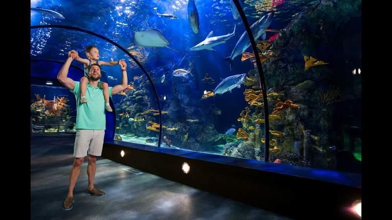 Swim over tunnel Aquarium with children inside Moody Gardens in Galveston Texas