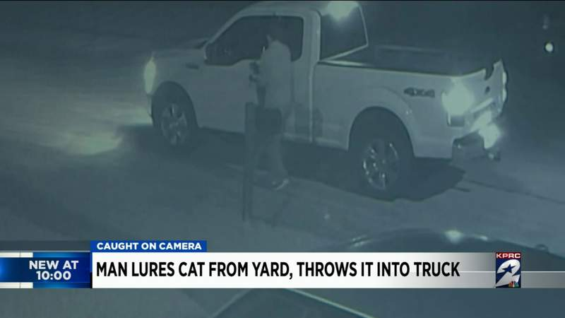 Man lures cat from yard, throws it into truck