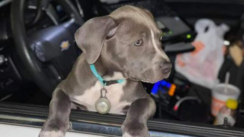 A puppy is safe after authorities said it was found alone inside a vehicle that had been involved in a crash.