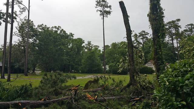 The thunderstorm moved through Gainesville, snapping trees and bringing down limbs.