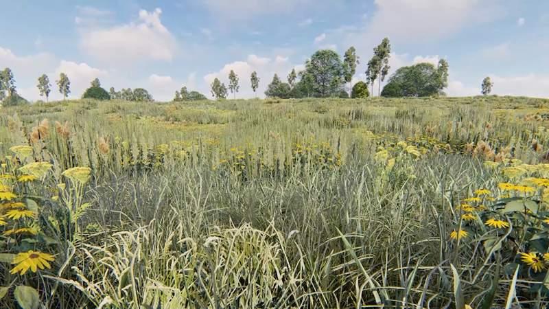 Memorial Park Conservancy $10 million prairie restoration pledge