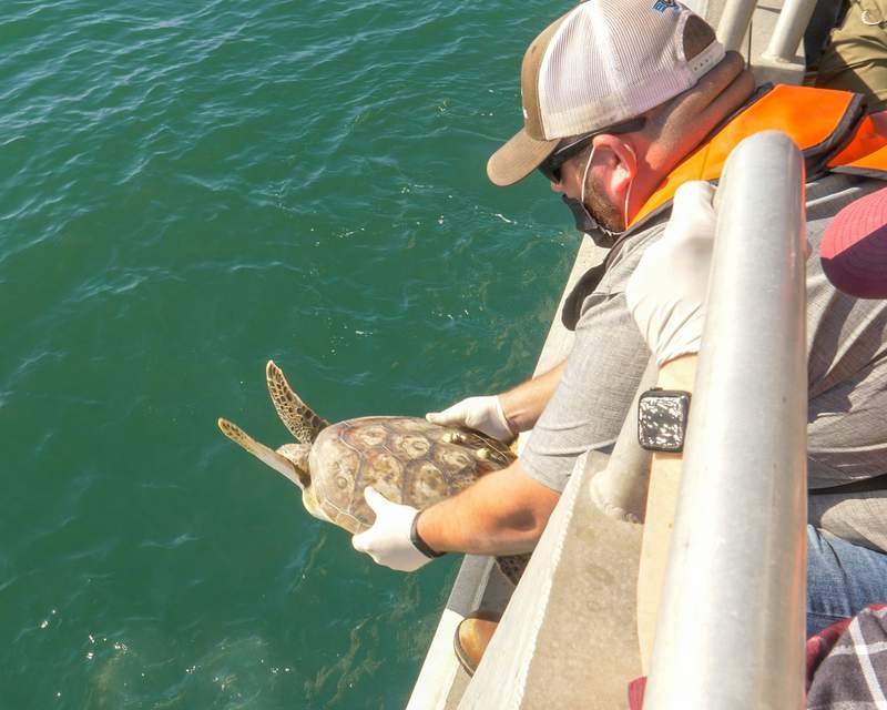 2.2021 Boat Sea Turtle Release