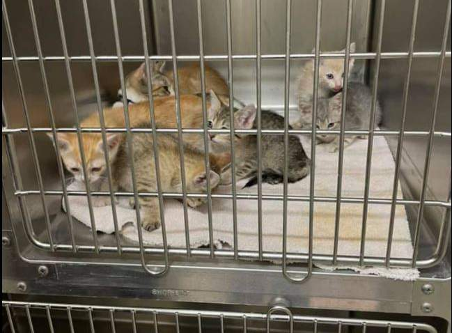 Six kittens are now safe at a local veterinarian after sitting inside a metal crate on Thursday.