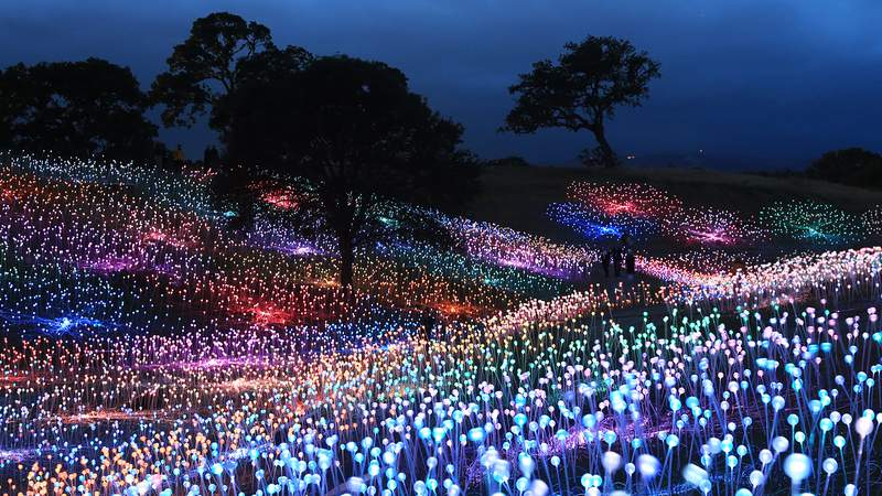 """In Bruce Munro's """"Field of Light,'' 11,700 stems of light in softly moving colors cover the Arboretum at Brookgreen Gardens"""