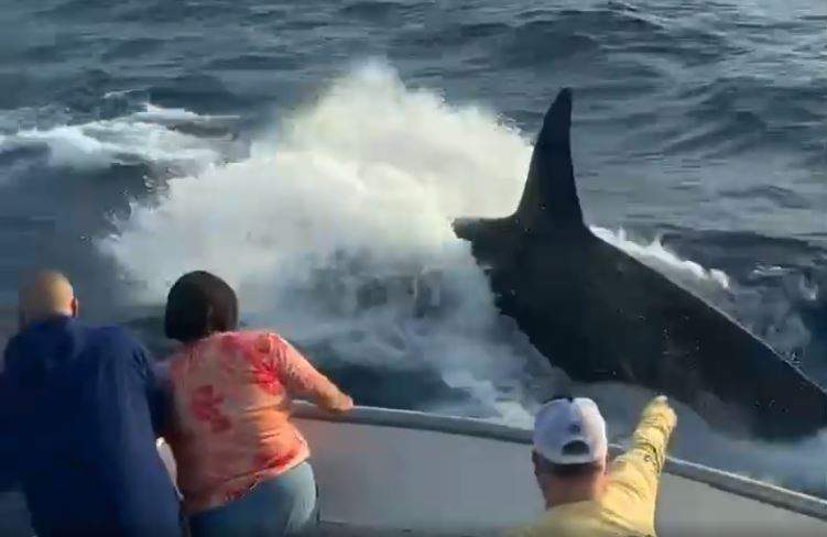 """Guests aboard the """"New Buccaneers"""" party boat on Galveston Bay encountered a pod of Orcas swimming away from the boat."""